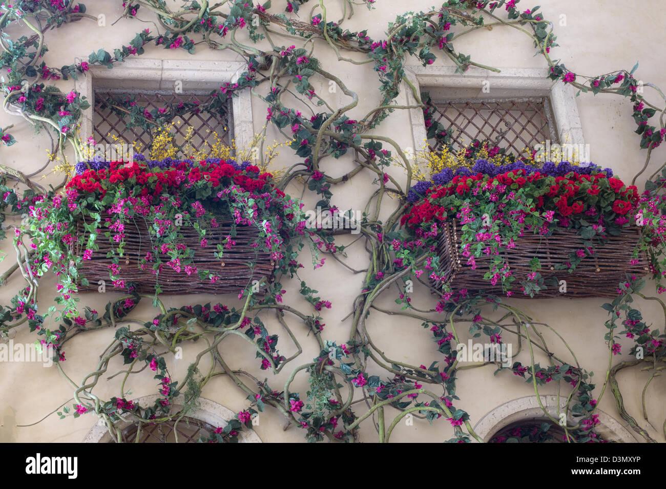 Finestra con fiori di arrampicata. Immagini Stock
