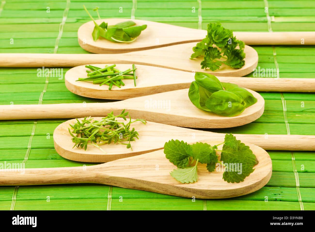 Varietà di erbe su cucchiai di legno Immagini Stock