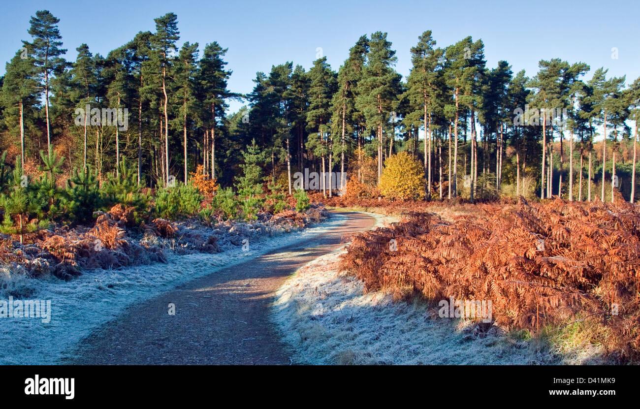 Incredibili sfumature autunnali tinte e colori da boschi e foreste su Cannock Chase Area di eccezionale bellezza Immagini Stock