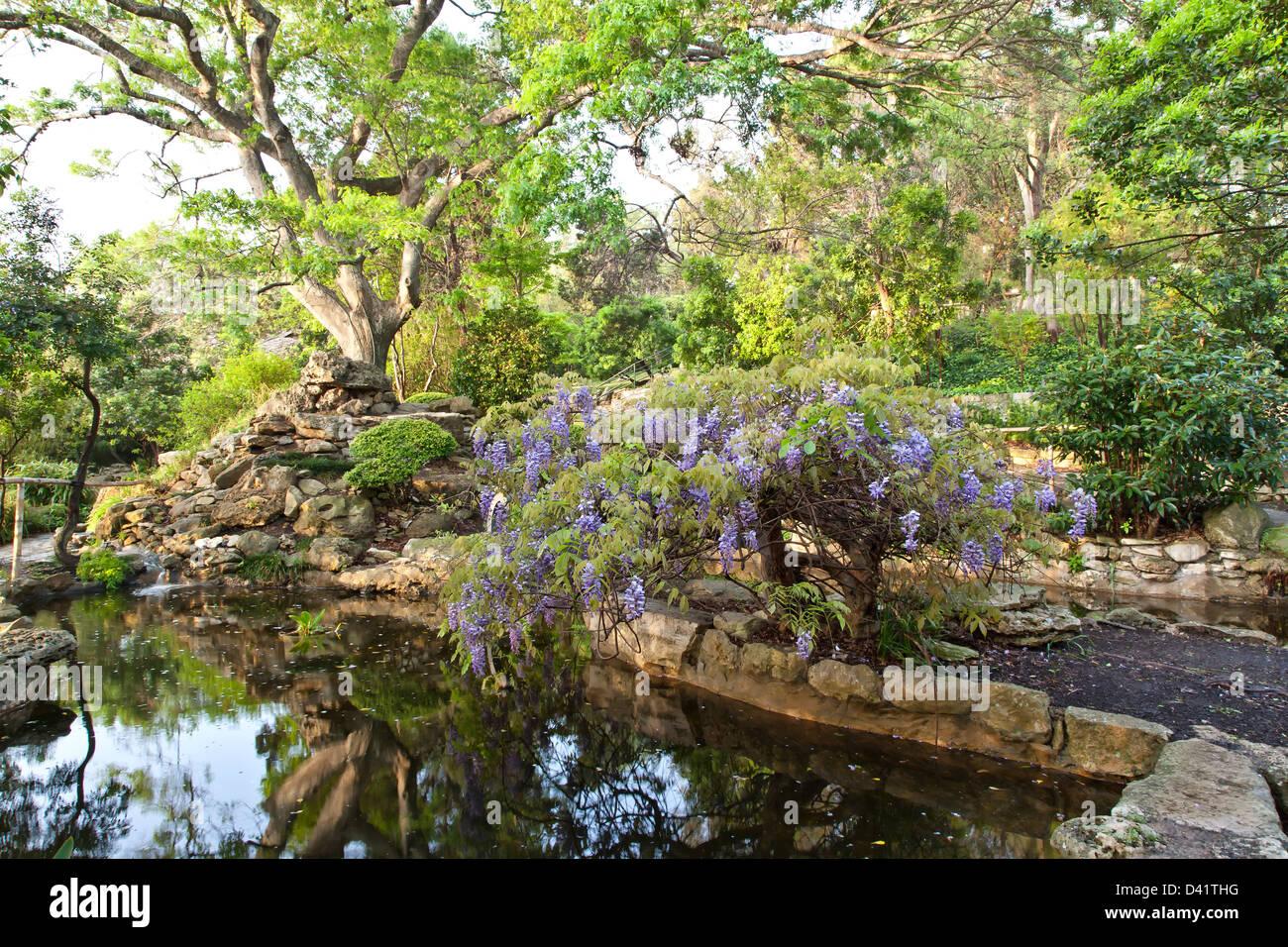 Isamu Taniguchi Giardino Giapponese, Zilker Giardino Botanico. Immagini Stock