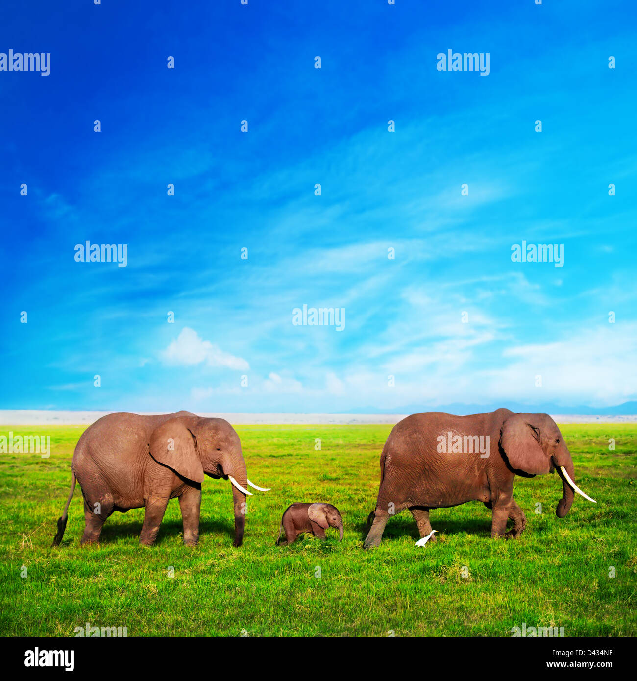 - Gli elefanti elefante africano famiglia sulla savana africana in Amboseli, Kenya, Africa Immagini Stock