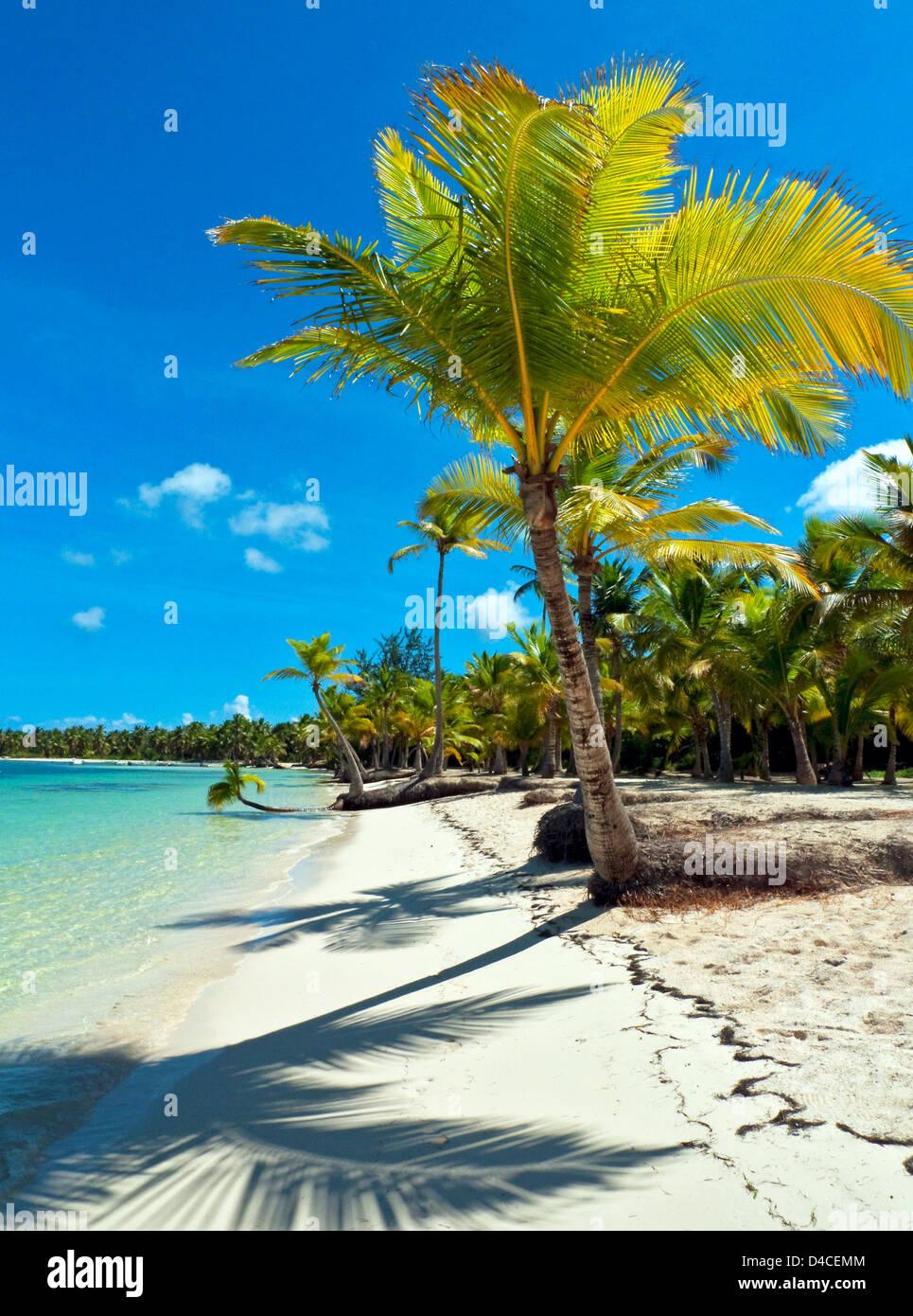 Palms at Playa Bavaro, Punta Cana, Repubblica Dominicana, Caraibi, America Immagini Stock