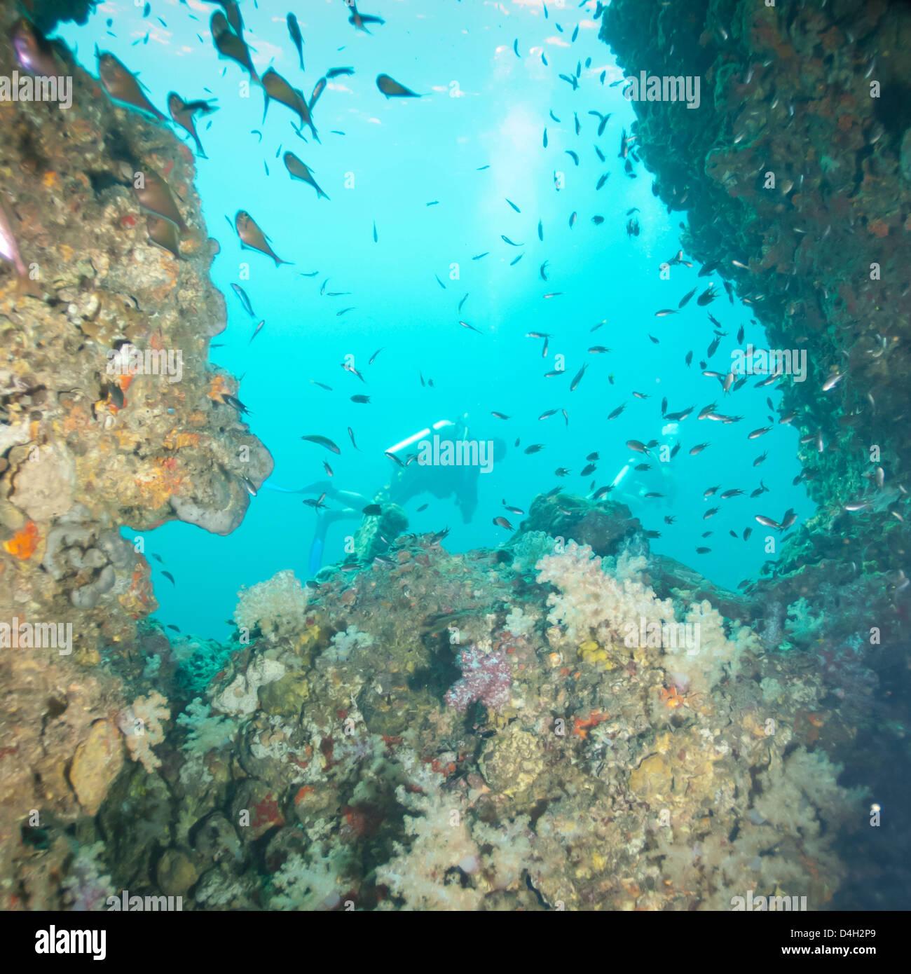 Scuba diving, nel sud della Thailandia, sul Mare delle Andamane, Oceano Indiano, sud-est asiatico Immagini Stock