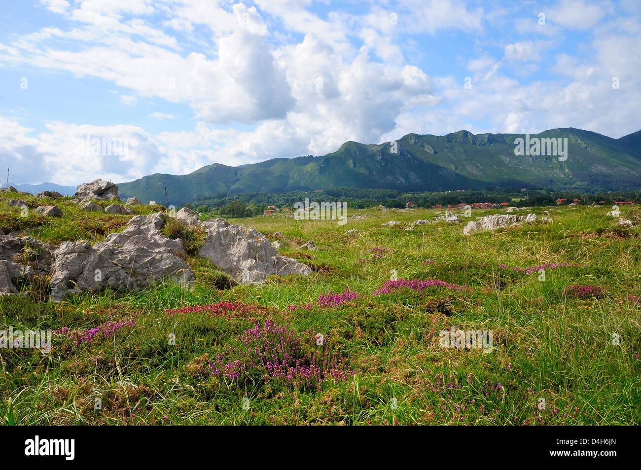 Mediterraneo heather fioritura con Picos de Europa montagne sullo sfondo, Ribadesella, Asturias, Spagna Immagini Stock