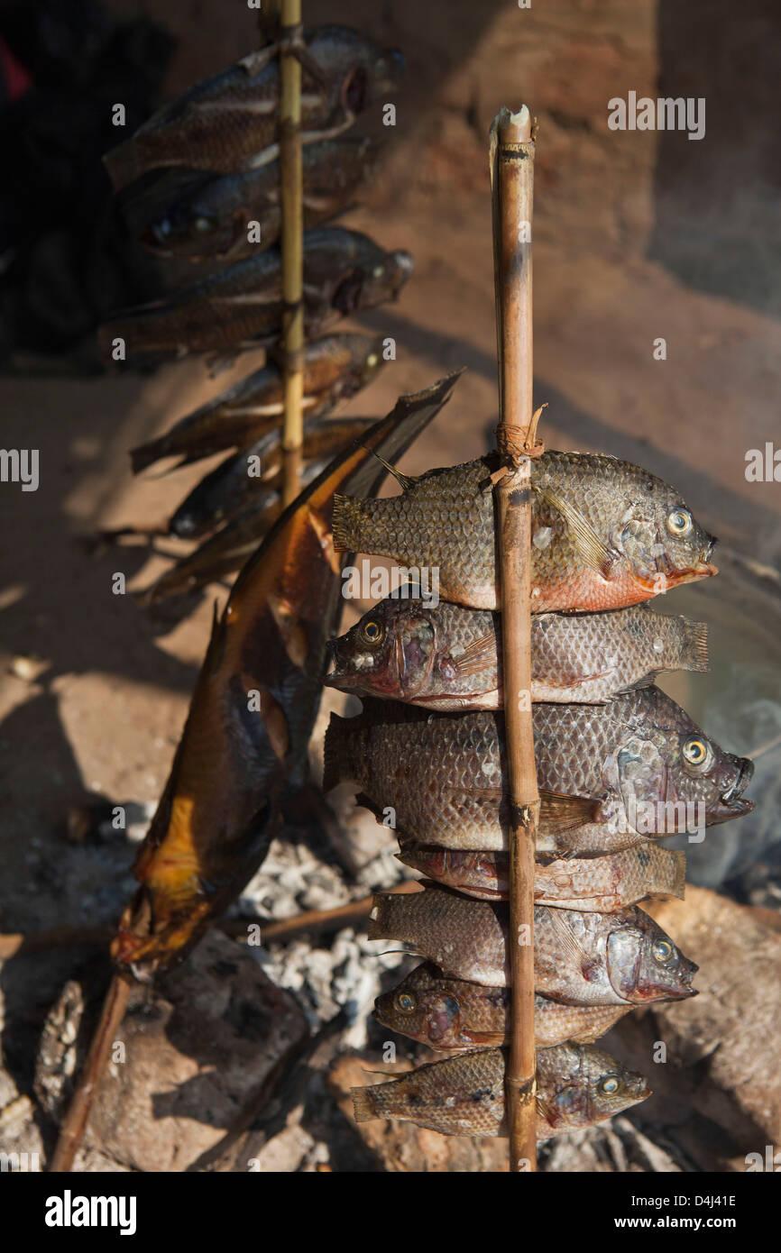 Pile di Tilapia piccolo pesce affumicato essendo attaccato ad un bastone di legno su Kubatsirana Fattoria nella Immagini Stock