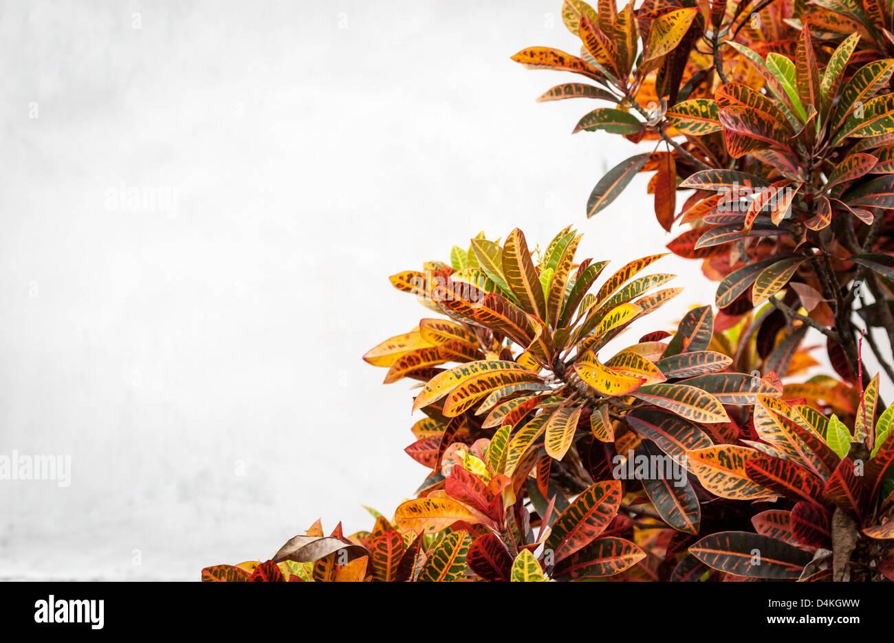 Fiori Giallo Verdognoli A Grappolo.Lussureggianti Fiori Di Diversi Colori Rosso Giallo Arancio E