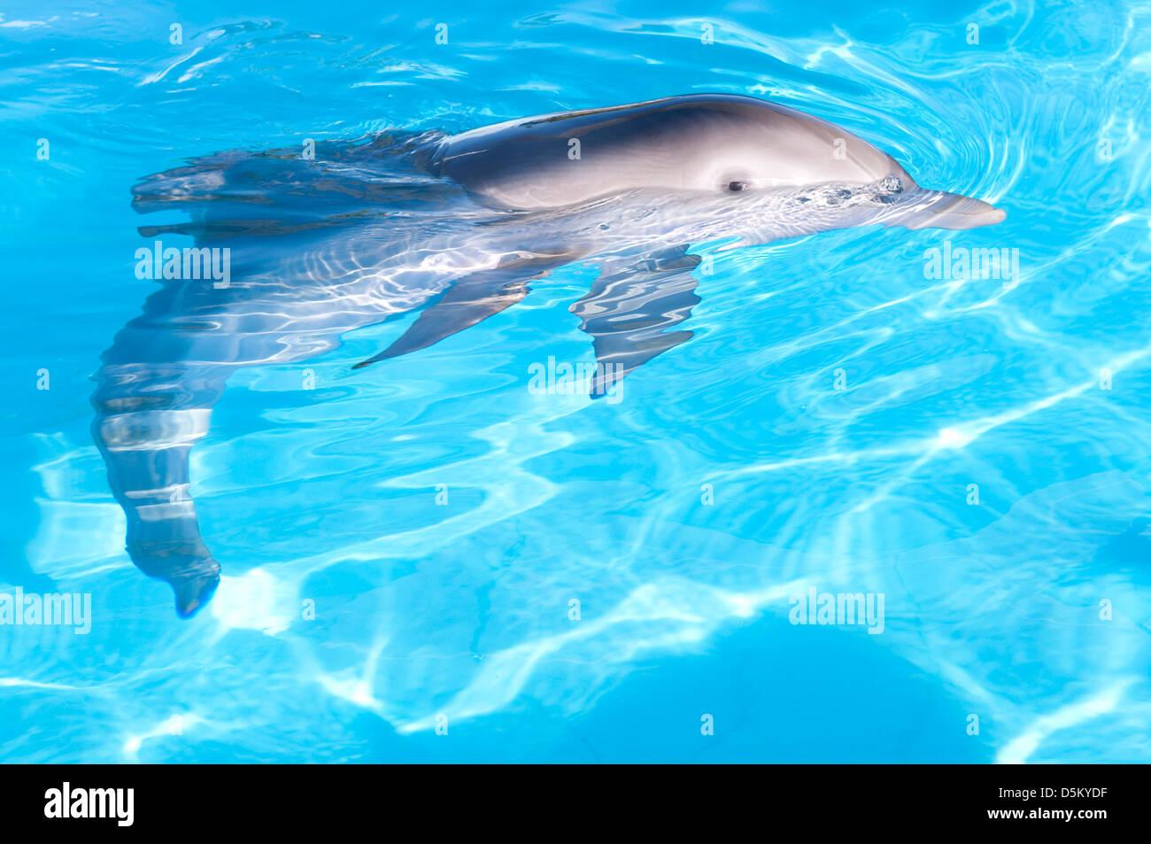 In inverno il racconto dei delfini (2011) Immagini Stock