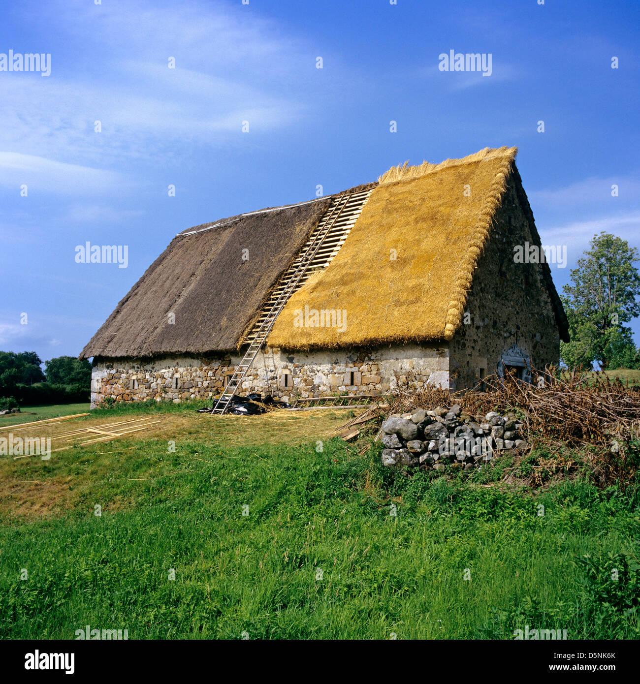 Restauro di un tetto di paglia su un vecchio fienile Immagini Stock