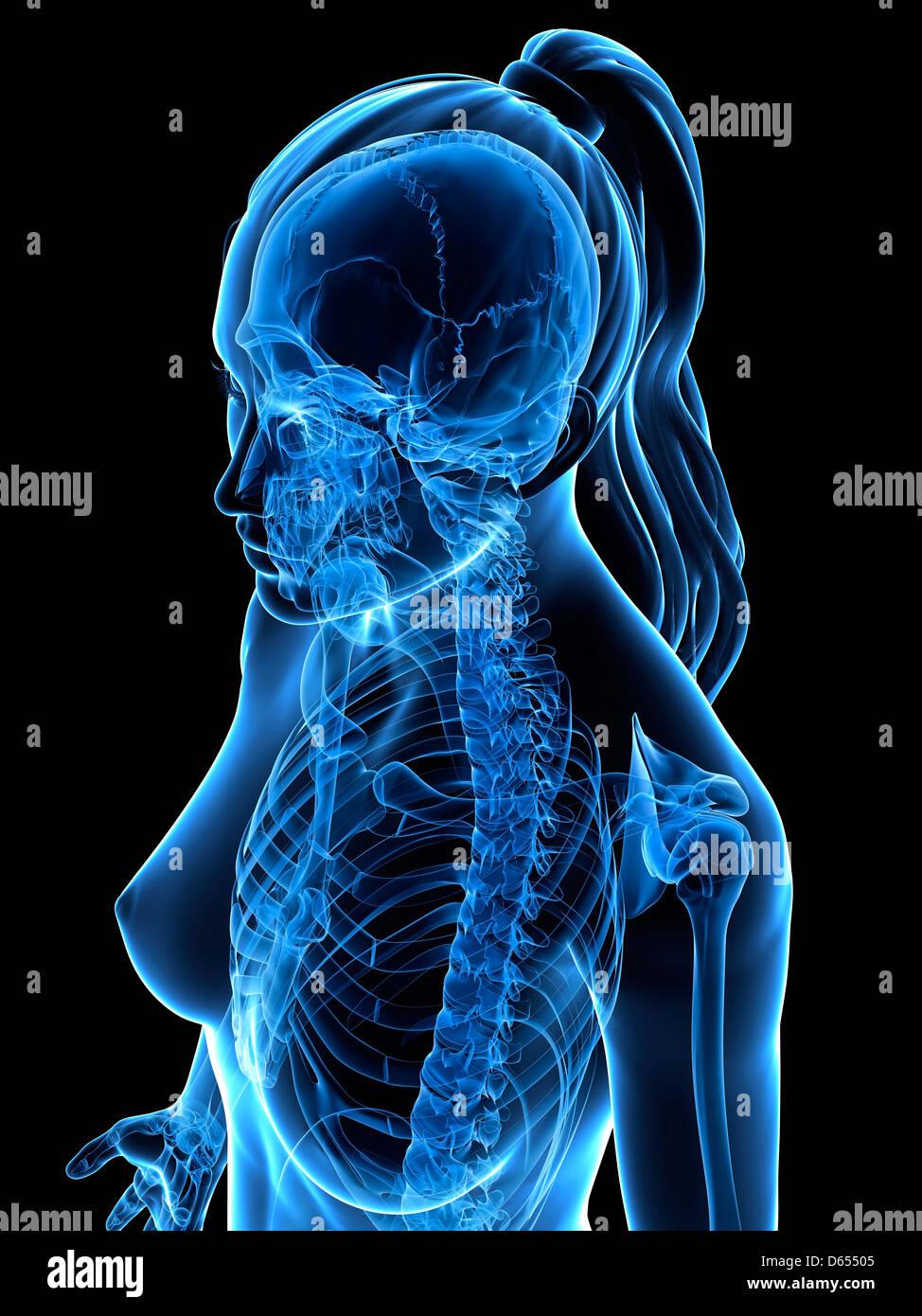 Femmina corpo superiore, artwork Immagini Stock