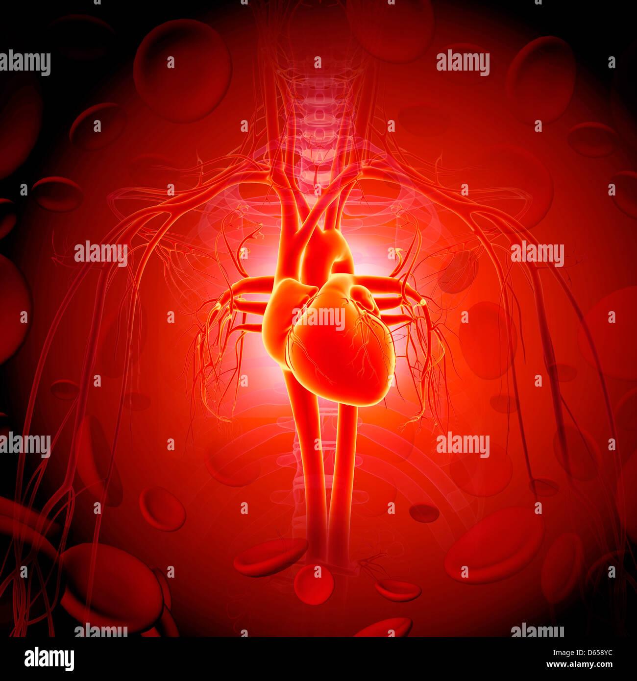 Il cuore umano, artwork Immagini Stock
