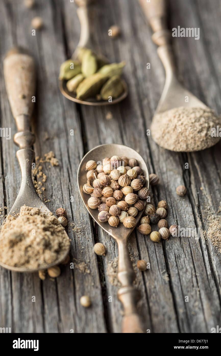Cucchiai con il cardamomo e i semi di coriandolo e polvere Immagini Stock