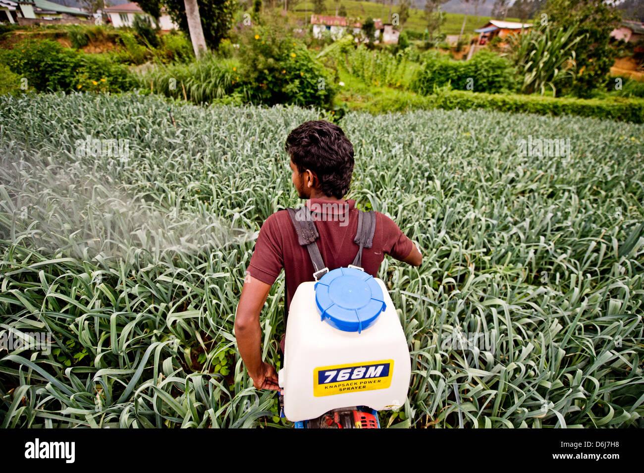 Un agricoltore e studente di ISFF utilizza insetticida per crescere i porri di Halgranoya, Sri Lanka, Asia Immagini Stock