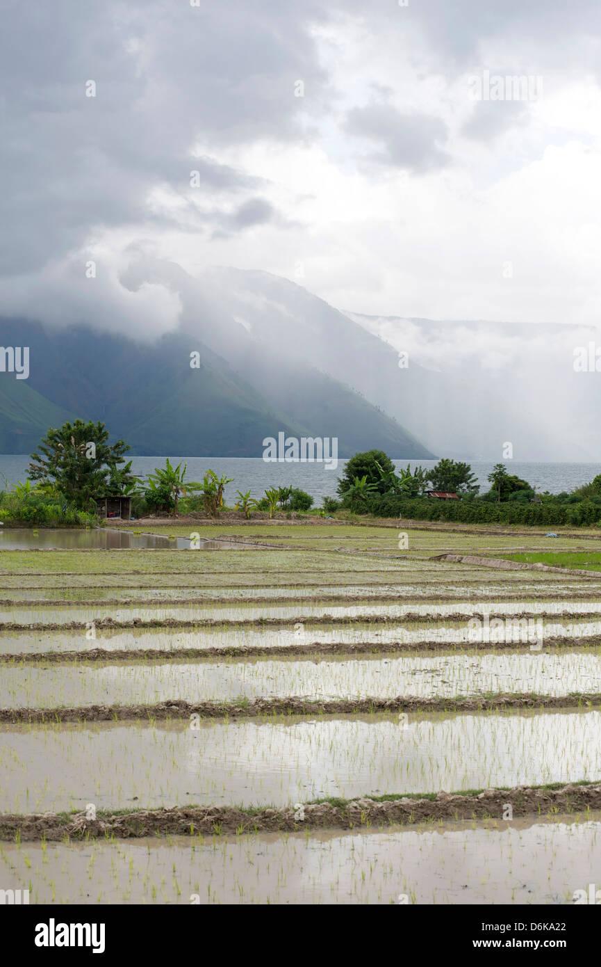 Le risaie, Lago Toba dall isola di Samosir, Sumatra, Indonesia, sud-est asiatico Immagini Stock