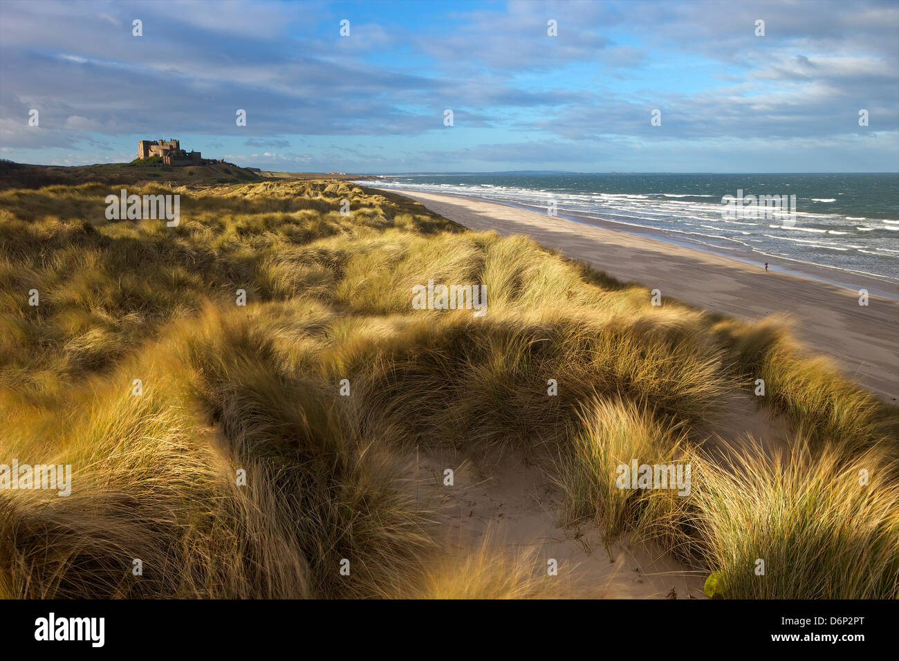 Marram grass, la spiaggia e il surf con il castello di Bamburgh in distanza, Bamburgh, Northumberland, England, Immagini Stock