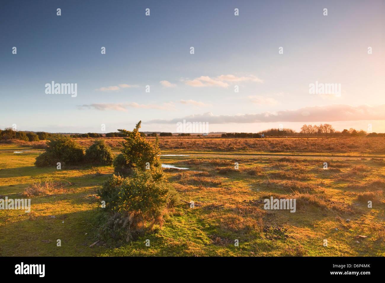 La brughiera di nuova foresta alla fine di una giornata invernale e, Hampshire, Inghilterra, Regno Unito, Europa Immagini Stock