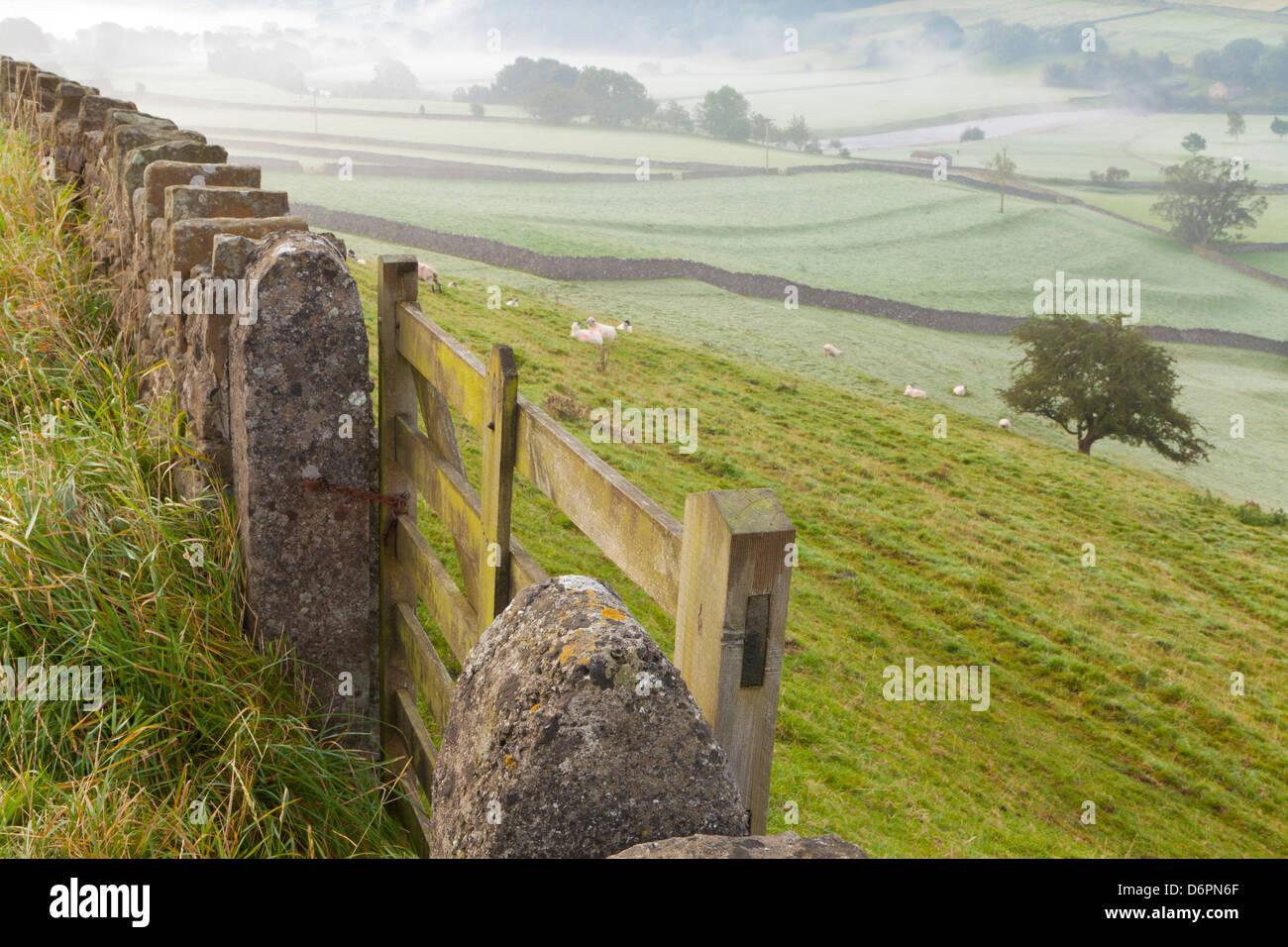 Gate nel muro di pietra e un campo vicino Burnsall, Yorkshire Dales National Park, il Yorkshire, Inghilterra, Regno Immagini Stock