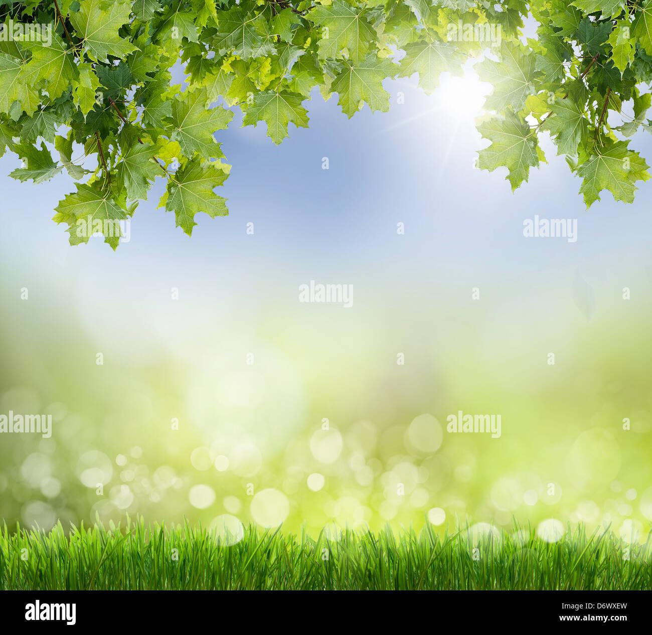 Verde naturale lo sfondo con il fuoco selettivo. Immagini Stock
