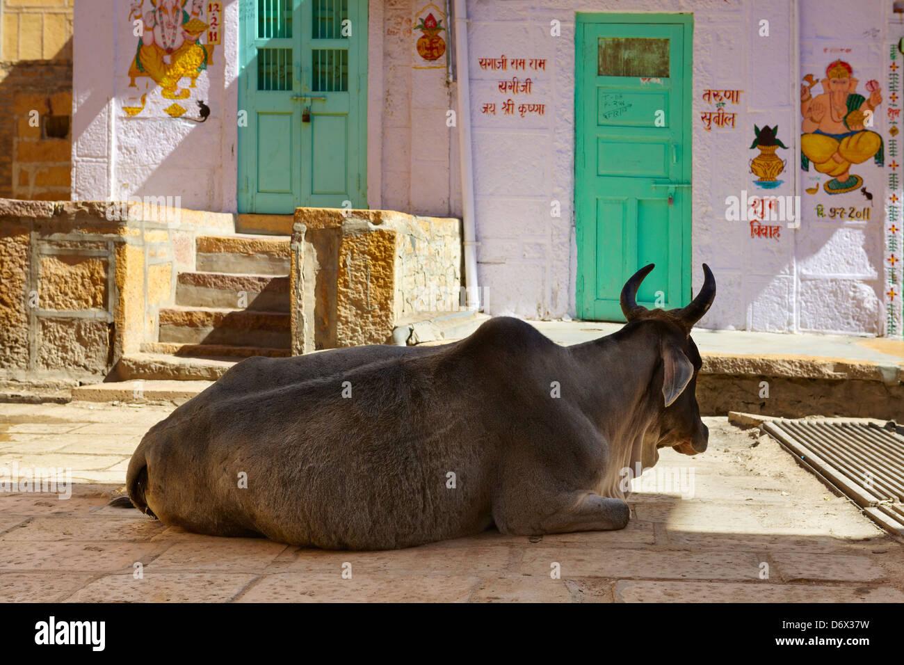 Scena di strada, mucca sulla strada, Jaisalmer, stato del Rajasthan, India Immagini Stock