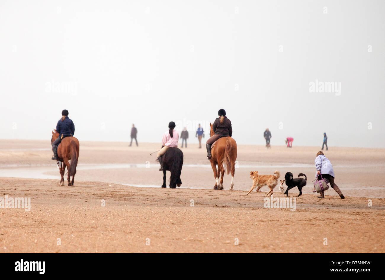 La gente a piedi, a cavallo e a piedi i cani, Holkham Beach, Norfolk, East Anglia England Regno Unito Immagini Stock