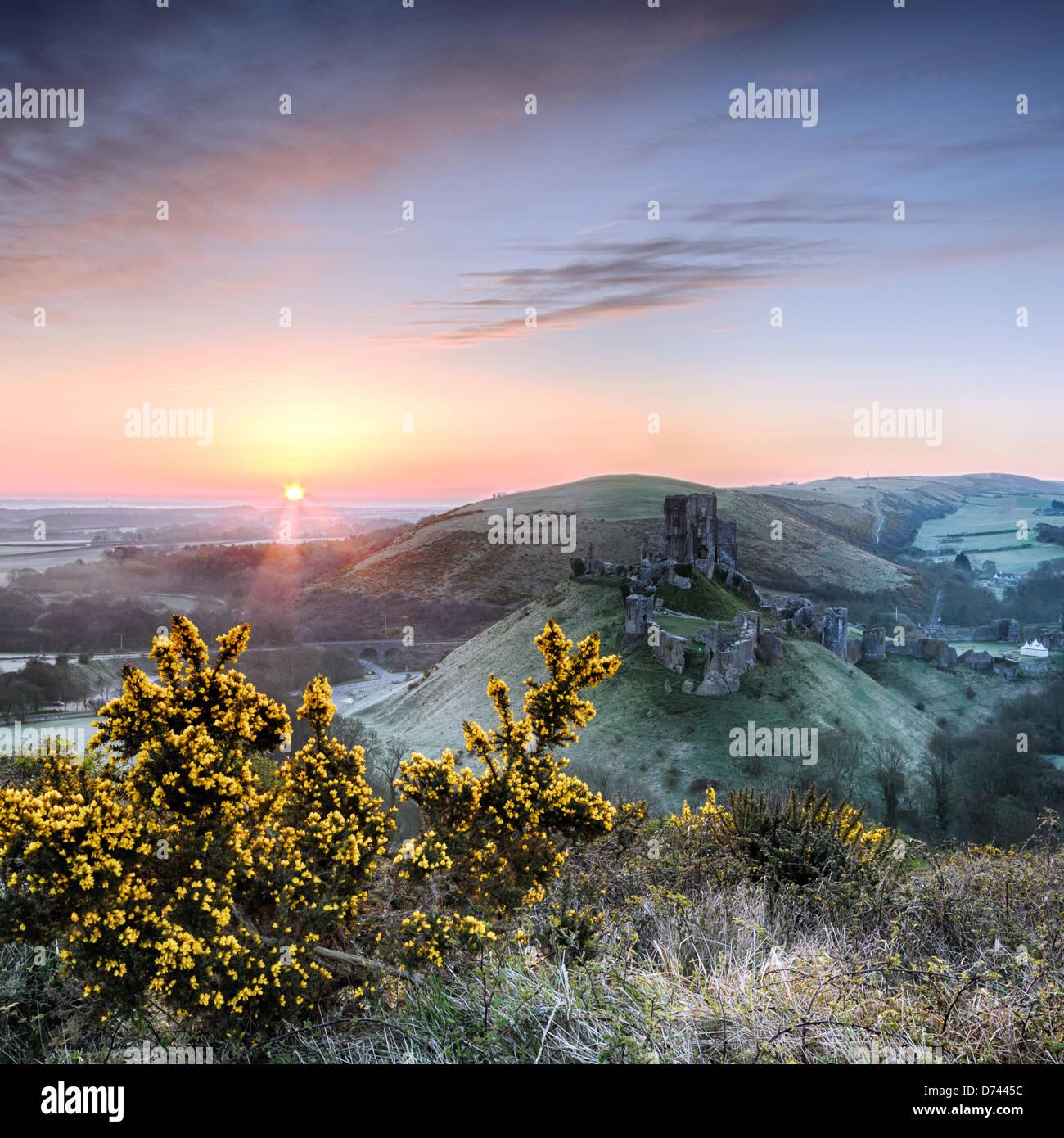 Sunrise guarda le rovine di Corfe Castle sull'Isola di Purpeck nel Dorset. Foto Stock