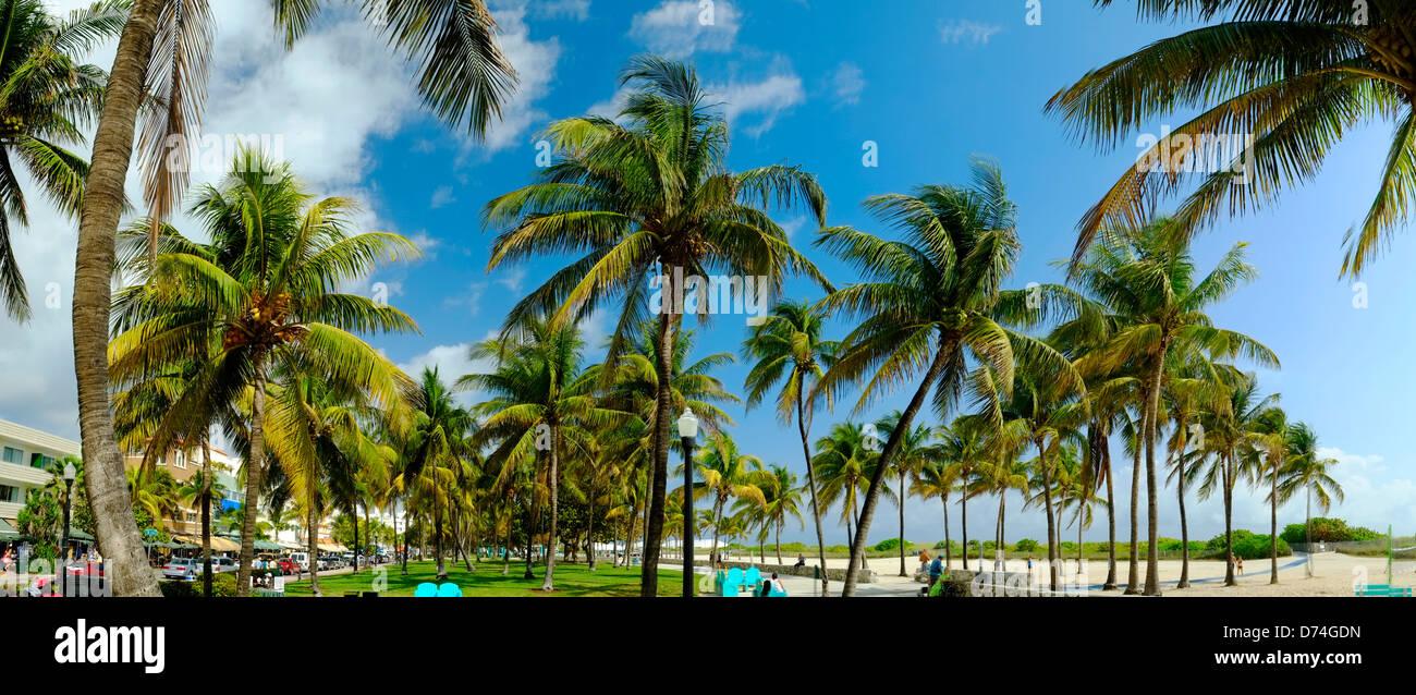 Gli alberi di palma, South Beach, Miami, Florida, Stati Uniti d'America Immagini Stock