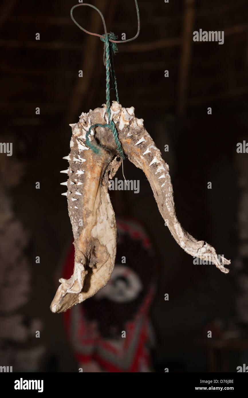 Denti di squalo in Xhosa Village, Costa Selvaggia, cappuccio Orientale, Sud Africa Immagini Stock