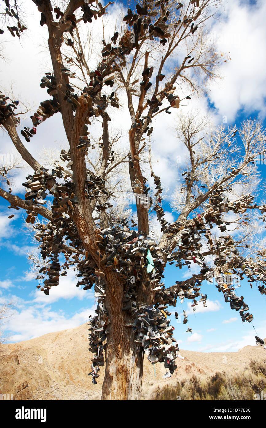 Tree ornato vecchie scarpe appeso dai viaggiatori sul lato US Route 50 Nevada USA Immagini Stock