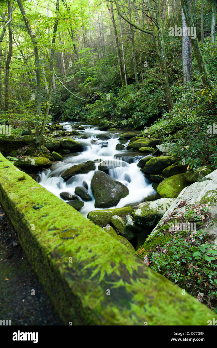 Fiume Impetuoso lungo una strada in Great Smoky Mountain National Park. Immagini Stock