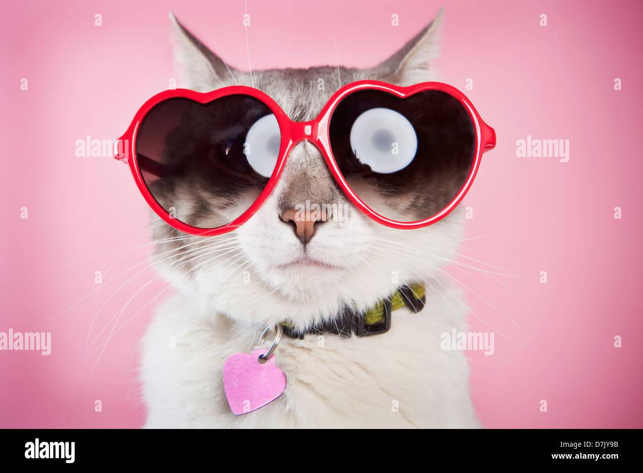 Valentine cat in posa con amore rosso occhiali da sole contro sfondo rosa Foto Stock