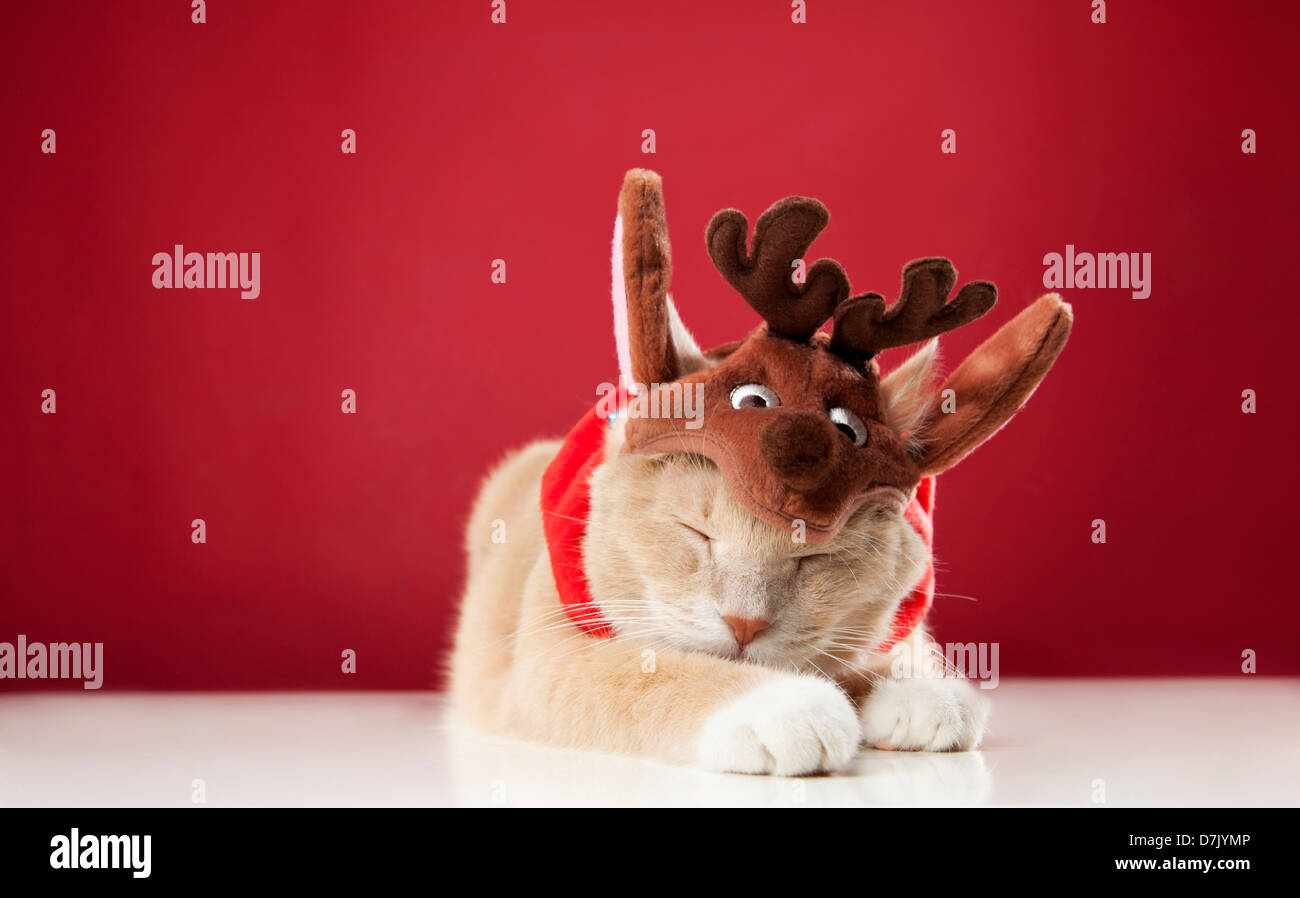 Luce colorata gatto pelo indossando il costume di renne contro lo sfondo rosso Immagini Stock