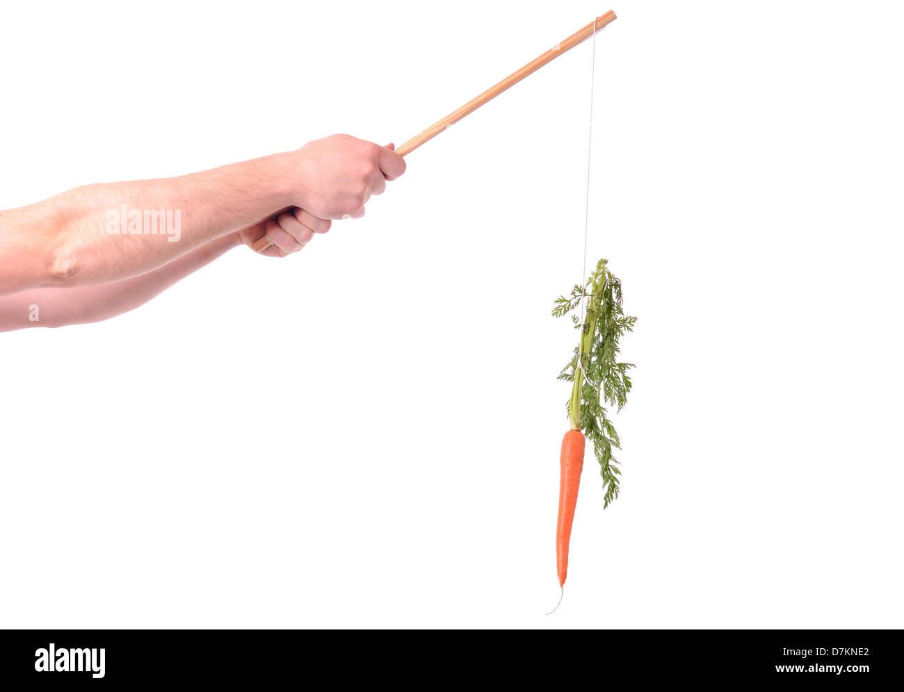 La motivazione di pendeva una carota su un bastone isolato su bianco Immagini Stock