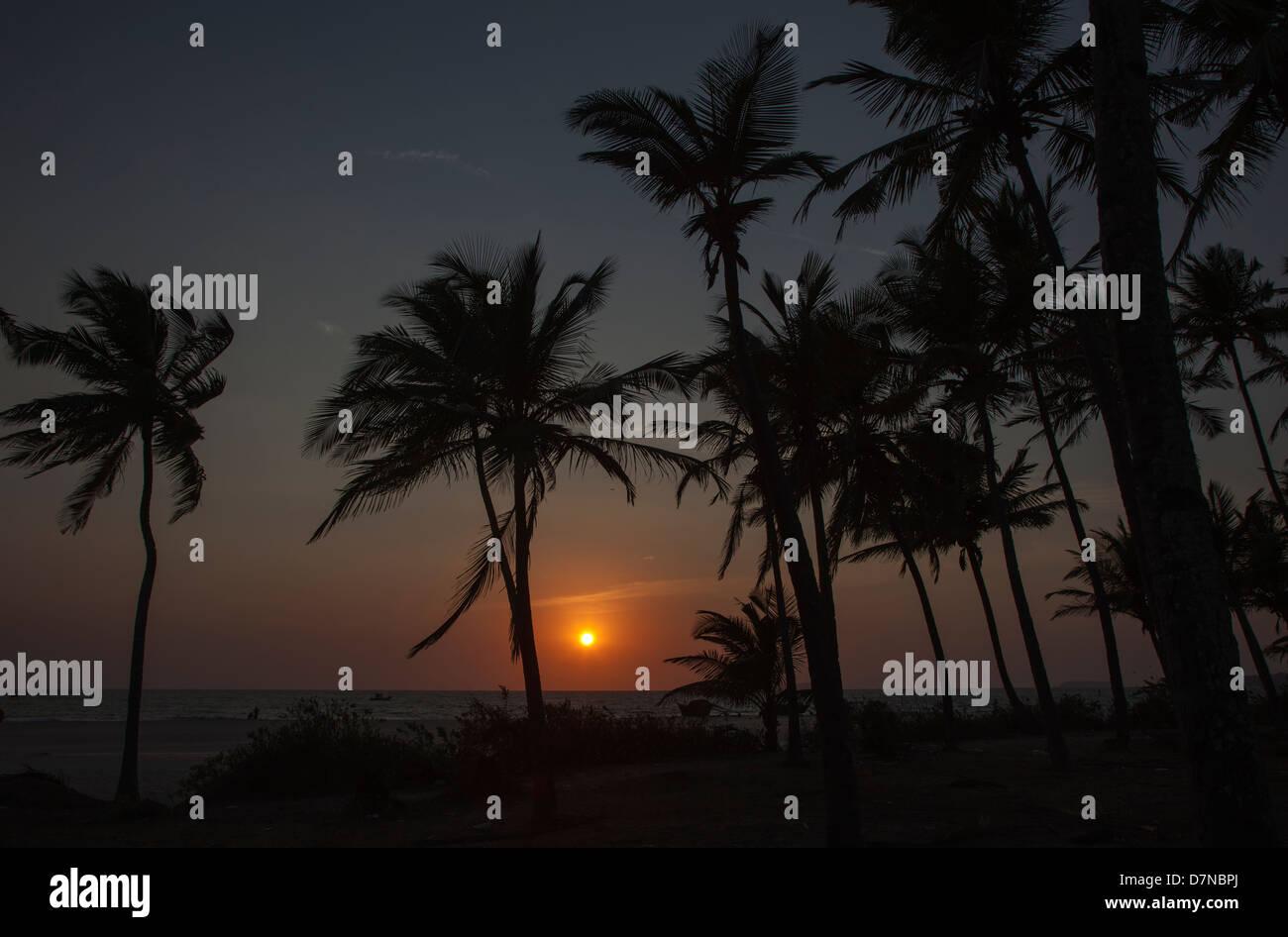 Un tramonto visto attraverso le palme sul Mare Arabico, Arossim Beach, a sud di Goa, India. Immagini Stock
