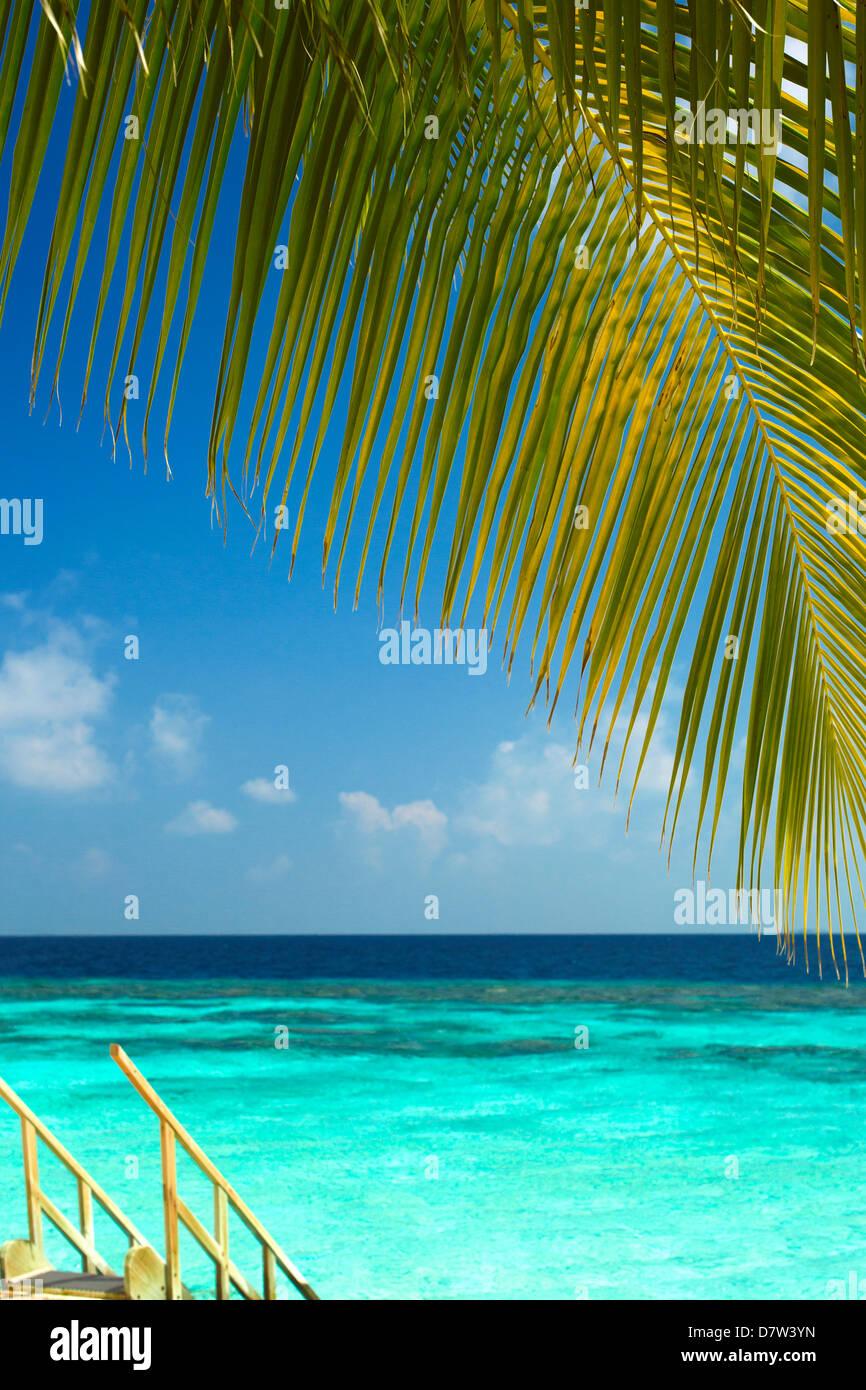 Scale di legno a mare tropicale, Maldive, Oceano Indiano Immagini Stock