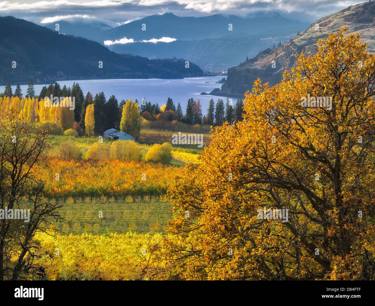 Orchard a colori autunnali e Columbia River. Columbia River Gorge National Scenic Area. Oregon Immagini Stock