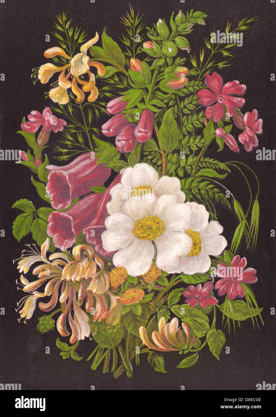 Fiori d'estate 1880 Immagini Stock