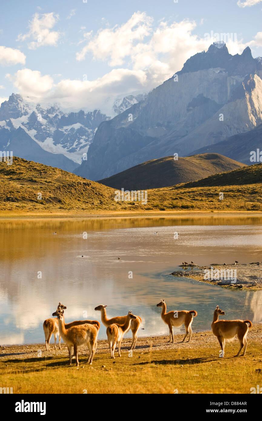 Parco Nazionale di Torres del Paine Cile Immagini Stock