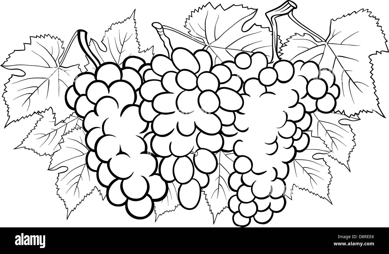 Bianco E Nero Cartoon Illustrazione Di Tre Grappoli Di Uva O Frutta Grapevine Food Design Per Il Libro Da Colorare Foto Stock Alamy