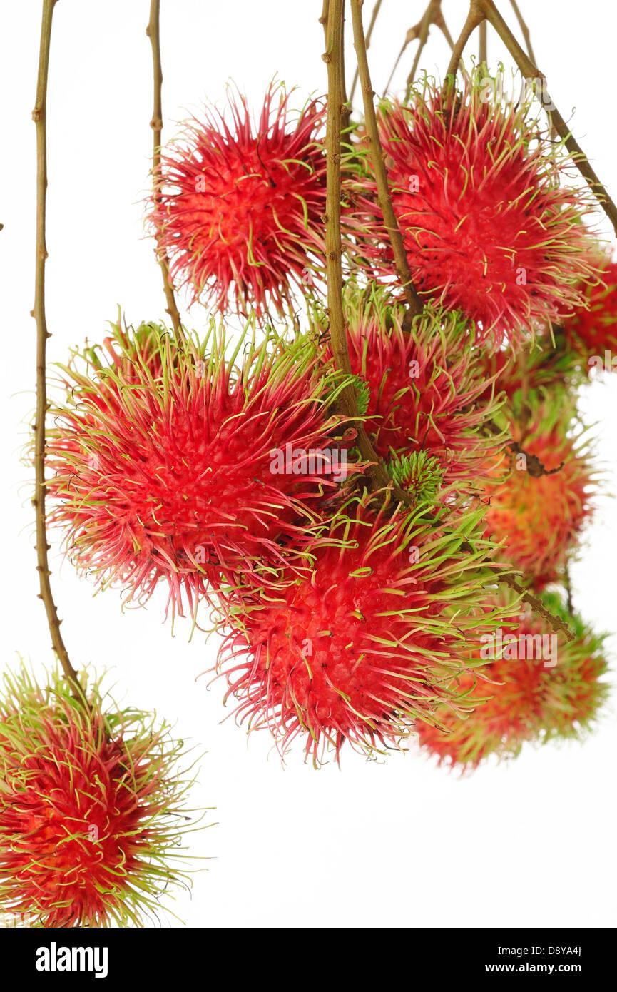Frutti di rambutan su sfondo bianco Immagini Stock