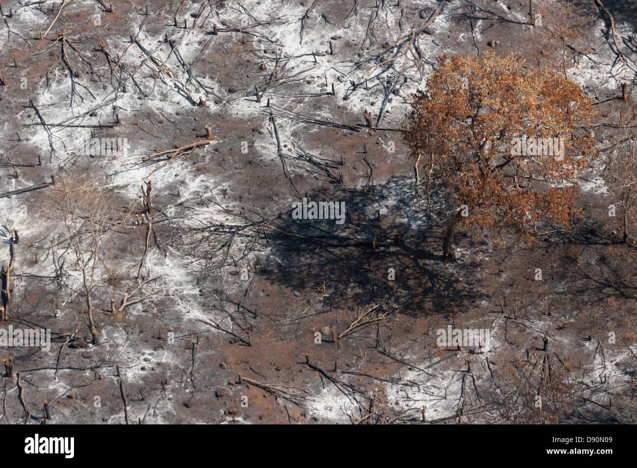 Scorched Earth masterizzazione stagionali di clearing Guinea forestale in Africa Immagini Stock