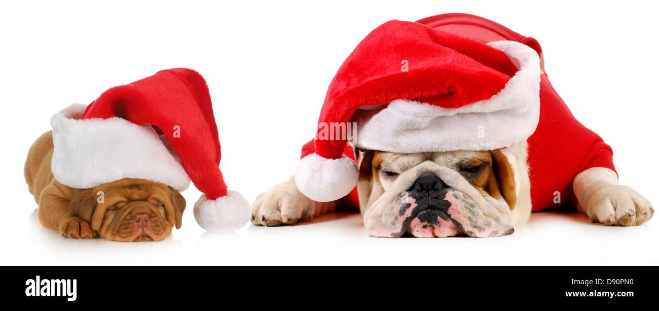 Cane santa - due cani indossando cappelli di Babbo Natale - Bulldog inglese  e Dogue de 1481071aa4c4