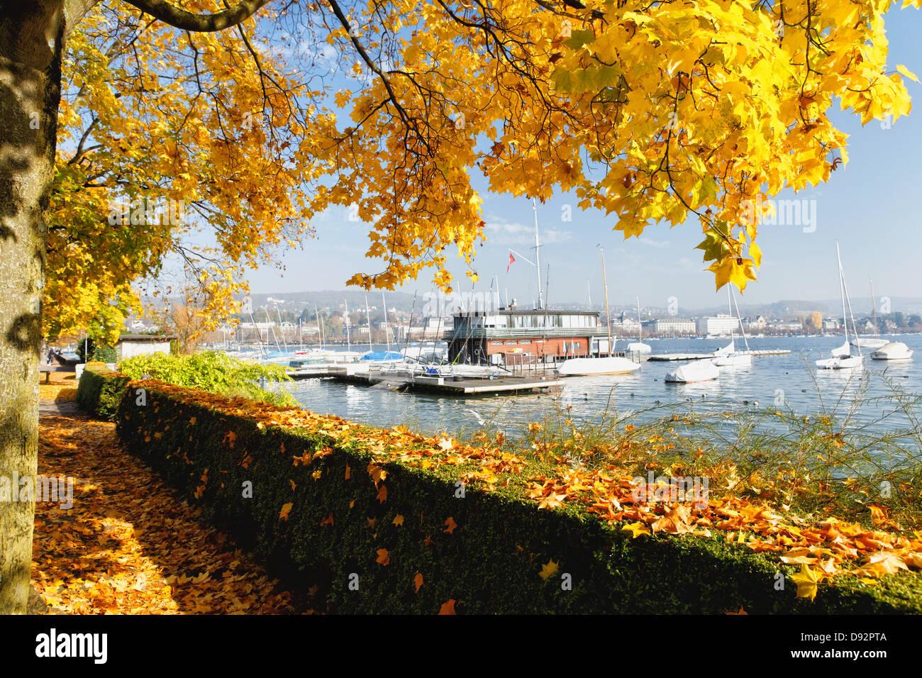 Soleggiata giornata autunnale presso il lago di Zurigo, Zurigo, Svizzera Immagini Stock