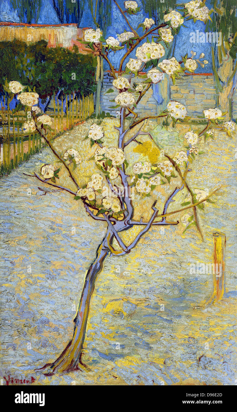 La pittura di piccole Pear Tree in fiore, 1888. Di Vincent van Gogh. Olio su tela. Immagini Stock