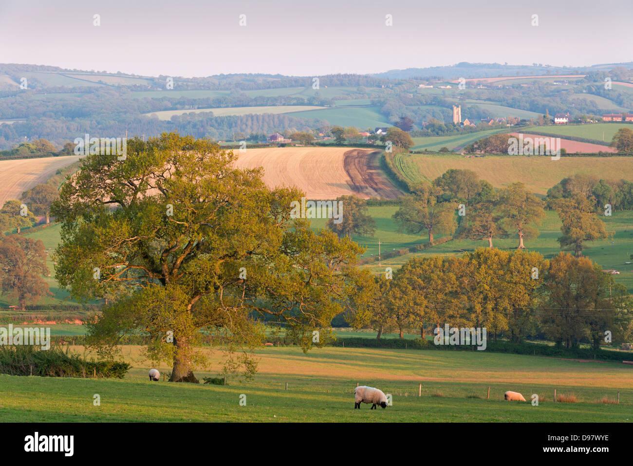 Pittoreschi terreni agricoli di rotolamento, Copplestone, Devon, Inghilterra. Molla (maggio) 2013 Immagini Stock