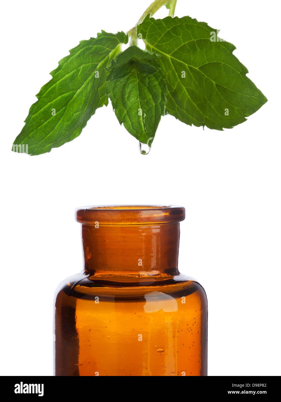 Goccia di essenza a base di erbe che gocciola dalla foglia di menta in marrone farmacia bottiglia, isolato su sfondo Immagini Stock