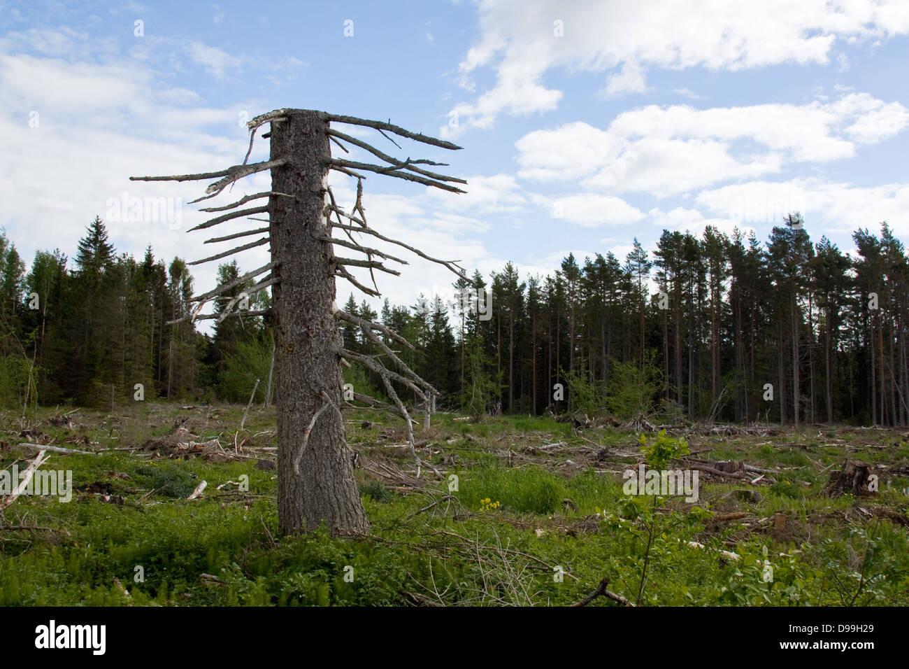 Deforestazione Immagini Stock