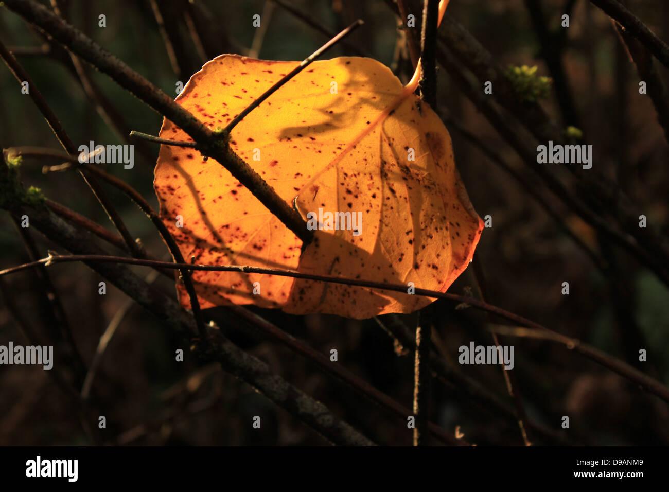 Speared immagini & speared fotos stock alamy