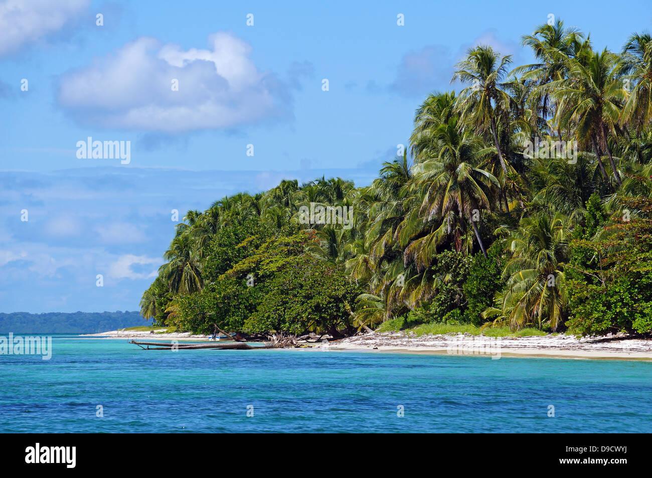 Spiaggia esotica con fitta vegetazione sulle isole Zapatillas , Bocas del Toro, Mar dei Caraibi, Panama Immagini Stock