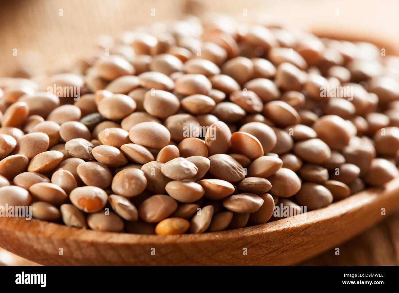 Organico secco lenticchie marrone contro uno sfondo Immagini Stock