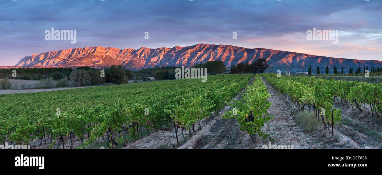 Un vigneto nr Puyloubier con le Montagne Ste Victoire all'alba, Var, Provenza, Francia Immagini Stock