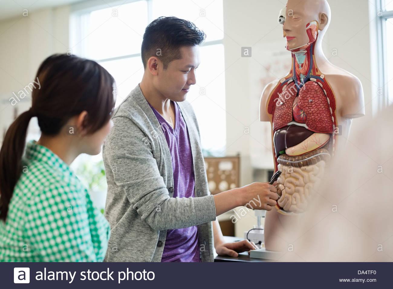 Gli studenti di anatomia di apprendimento in un college nel laboratorio di scienze Immagini Stock